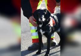 Vergifteter Rettungshund