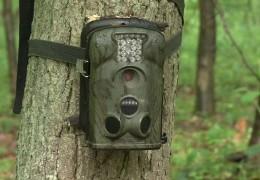 Kameras im Wald