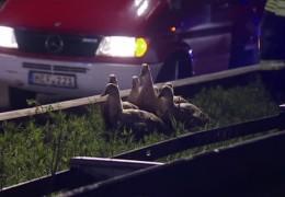 Entenjagd nach Unfall auf der Autobahn