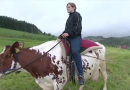 Kuh statt Pferd