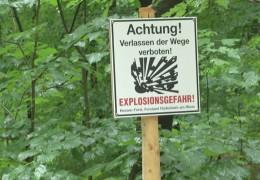 Weltkriegsbombe im Niederwald?