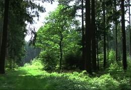 Nationalpark Hunsrück: Landesregierung stellt Tourismus-Pläne vor