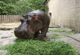 Tragödie im Frankfurter Zoo