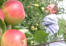 Bauern befürchten Gewinneinbruch