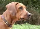 Hundehasser in Hattersheim