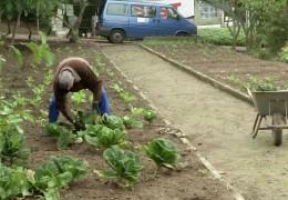 Arbeitslose ernten für sozial Schwache