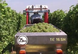 Weinlesebilanz für Rheinhessen