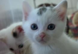 Hessen geht gegen streunende Katzen vor