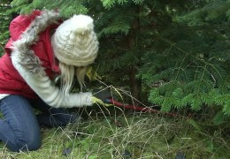 """Unsere """"Weihnachtsreporter"""" beim Baumfällen"""