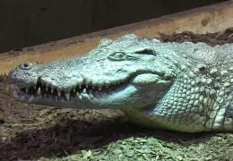 Krokodile im Keller