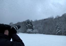 Invasion der Bergfinken