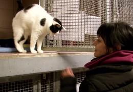 Tierheime klagen über finanzielle Schwierigkeiten durch Mindestlohn