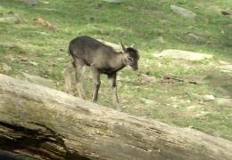 Nachwuchs im Opel-Zoo