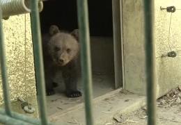 Bärenbaby im Wildpark Knüll