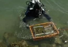 Polizei trainiert unter Wasser