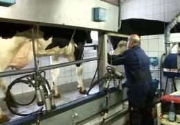 Milchbauer bangen um ihre Existenz