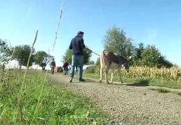 Mit dem Esel durch die Südpfalz