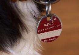 Verein sucht Haustiere