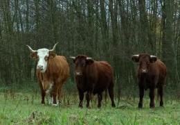 Seltene Tierarten im Hessenpark