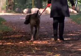 Wiesbaden verdoppelt Hundesteuer