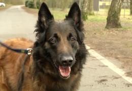 Spürhunde-Ausbildung in Hessen