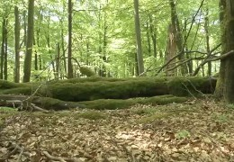 1 Jahr Nationalpark Hunsrück-Hochwald