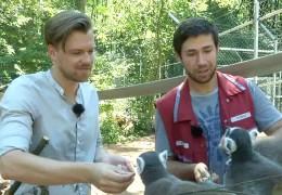 Affenhitze im Affenhaus