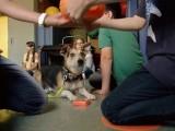 Hunde als Lehrer