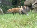 Zu Besuch bei Fuchs und Dachs