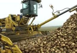 Zuckerrübenernte auf Hochtouren