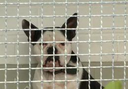 Aggressive Hunde bereiten Tierheimen Probleme