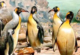 Forscher entdecken prähistorischen Riesen-Pinguin