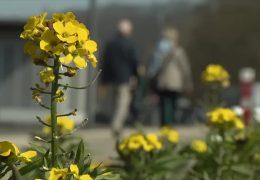 Ein Hauch von Frühling …