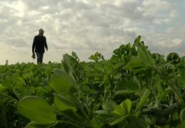 Öko-Bauern laufen Sturm gegen die EU