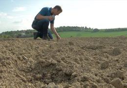 Bauern klagen über Wegfall der Zuckerquote