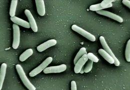 Kampf den multiresistenten Keimen
