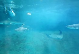 Streit um Aquarium für Haie