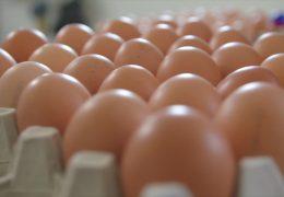 Skandal um verunreinigte Eier