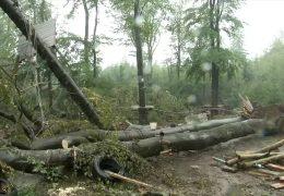 Das grosse Aufräumen im Wald nach dem Sturm geht weiter