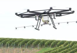 Drohnen bei der Weinbergsarbeit