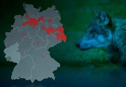Tierhalter haben Angst vor dem Wolf