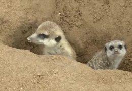Nachwuchs im Neuwieder Zoo