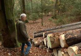 Staatlicher Holzverkauf verstößt gegen Kartellrecht