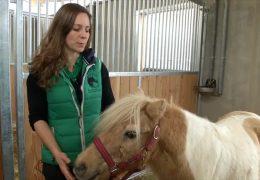 Klinik für krebskranke Pferde