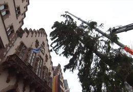 Der Christbaum für Frankfurt kommt aus dem Sauerland