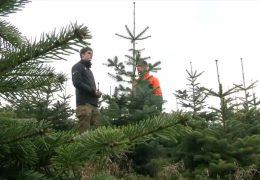 17:30 Adventskalender: Wie finde ich den richtigen Weihnachtsbaum?