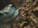 Ein Heim für Reptilien in Not