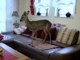 Ein ziemlich ungewöhnliches Haustier: Rehkitz Bambi