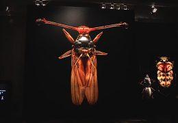 Microsculpture im Hessischen Landesmuseum