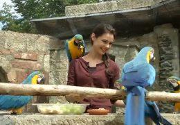 Papageienasyl im Hochtaunus